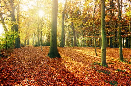 Sonnenstrahlen im bunten Herbstwald