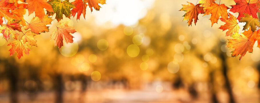 Beautiful colorful autumn leaves and blurred park background. Banner design