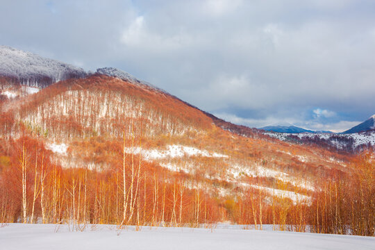 uzhanian natural park in snow covered mountains. beautiful nature scenery on a sunny day. mixed forest on the hills. clouds on the sky