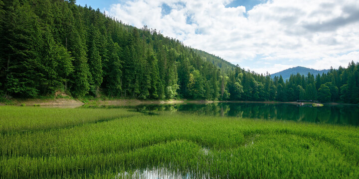 high altitude mountain lake among the forest. spruce trees on the shore. beautiful nature scenery on a sunny day.
