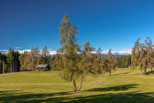 Spätsommer auf dem Salten, Südtirol