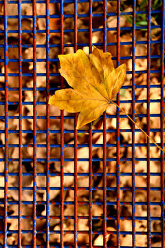 autumnal colored maple leaf on a blue grid of a seat