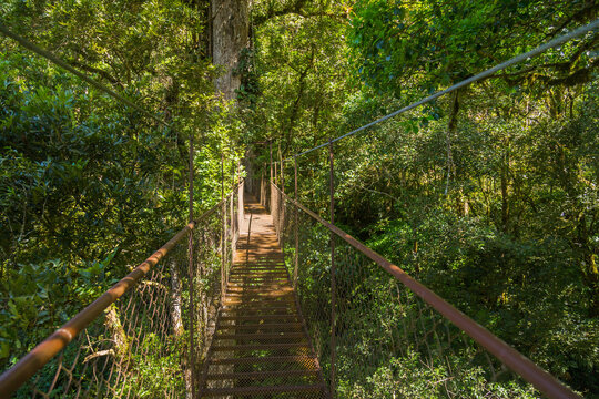 Hanging bridge in Panama