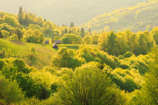 Spring gold evening rural landscape in the Mizhhiria, Carpathian mountains.