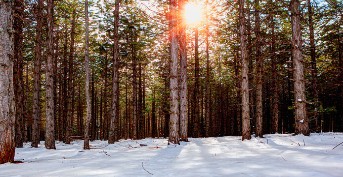 Beautiful winter landscape with sun rays in the forest