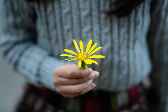 黄色い花を差し出す少女