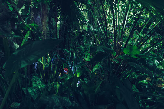 dense tropical forest background