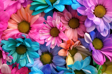 Colourful flower heads with multi coloured heads and petals