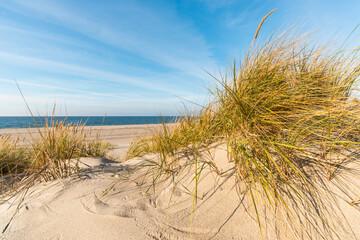 Fototapeta Baltic Sea with golden yellow beach oats in the sun.
