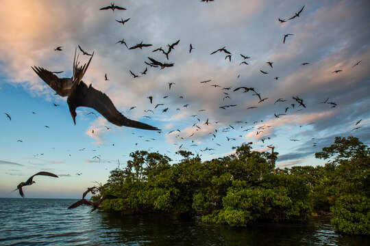 Scenic view of birds flying mid air over  Bird Island during sunset