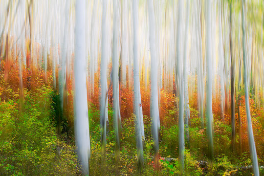 Digital painting of birch trees in forest