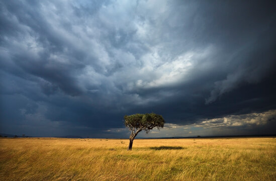 Scenic view of storm clouds over lone acacia tree in field
