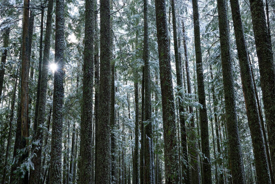 View of sun shining through trees in forest
