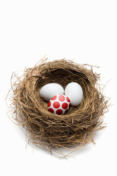 Bird nest with different eggs