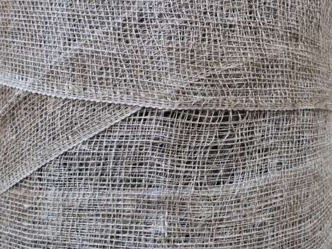 tree wrapped in jute to protect its stem