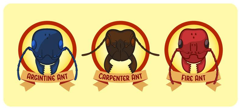Three Types of Ants - Argentine, Carpenter, Fire - Vector Illustration