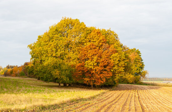 a group of colorful trees in rural landscape