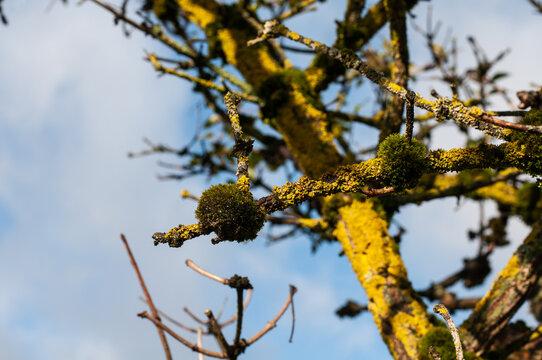 cushions of moss on dead elder wood