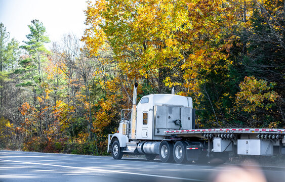 Classic white big rig semi truck with empty flat bed semi trailer driving on the autumn road with yellow maples