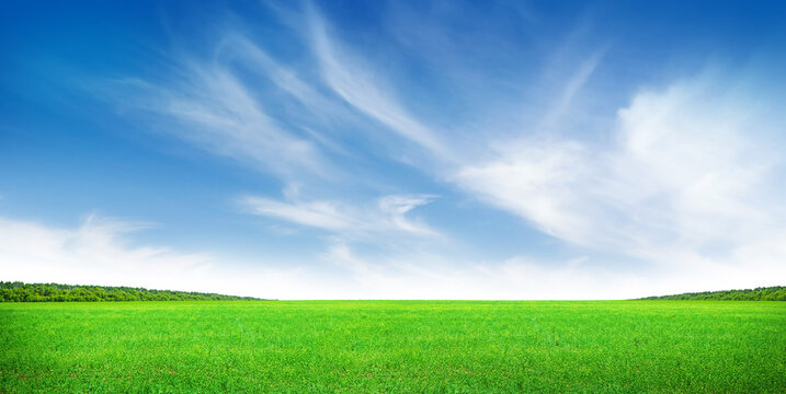 Green grass field and clear blue sky
