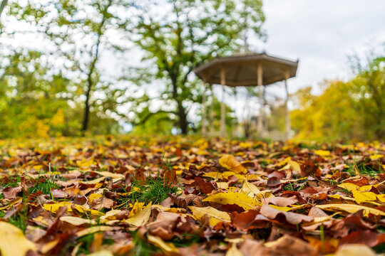 Pavilion at the Palmengarten in Leipzig and colorful autumn leaves
