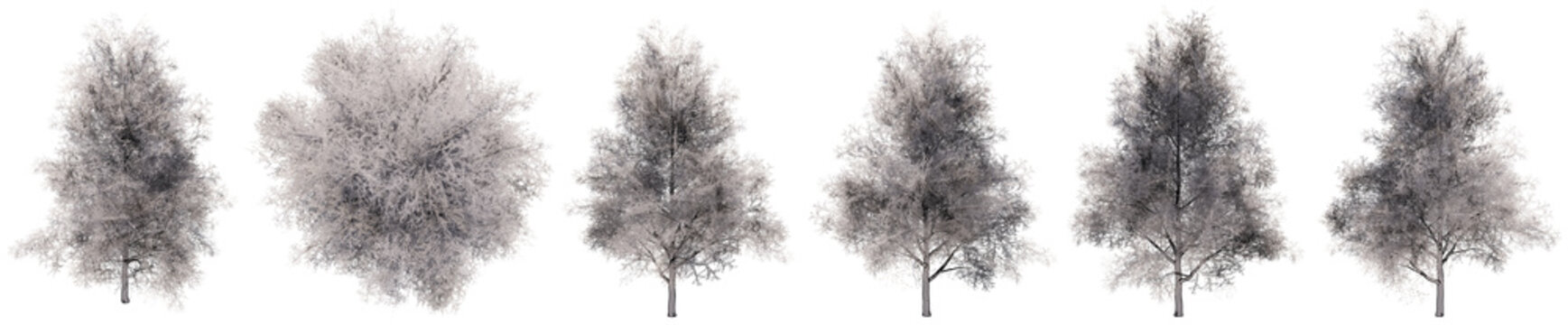 Set or collection of drawings of Ginkgo trees isolated on white background . Concept or conceptual 3d illustration for nature, ecology and conservation, strength and endurance, force and life