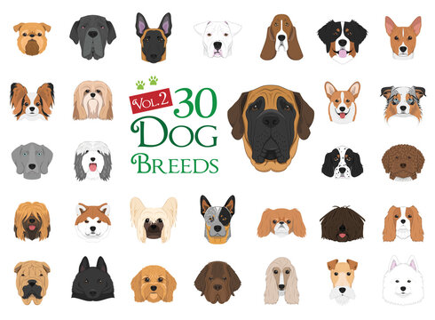 Dog breeds Vector Collection: Set 2. 30 different dog breeds in cartoon style.