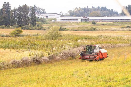 蕎麦(最上早生)の収穫をするハーベスタ