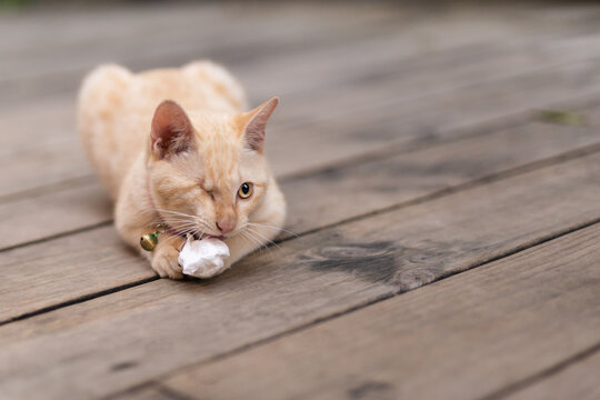 Injured cat with one eye playing with paper on the wooden floor.