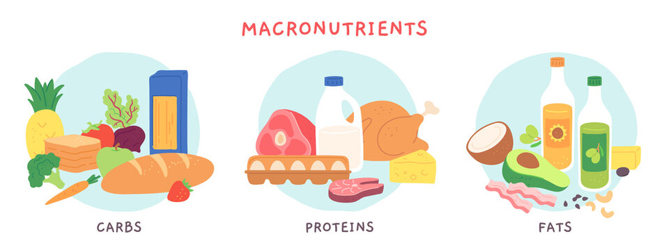 Food macronutrients. Fat, carbohydrate and protein foods groups with fruits and dairy products. Nutrient complex diet vector infographic. Illustration eating ingredient, grocery nutrition for cooking