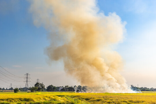 Smoke Over Burnt Rice Field (Air Pollution)