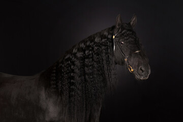 black horse portrait