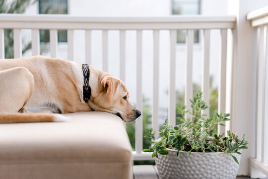 Dog relaxing on back porch, bored.