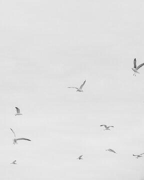 black and white image of birds flying