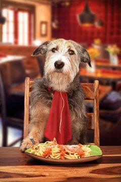 Dog Eating at Pet-Friendly Restaurant