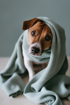 A cute dog in a wool scarf.