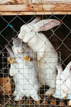 Pets rabbits in a cage.
