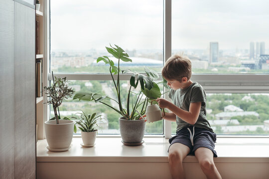 A young boy takes care of home plants.