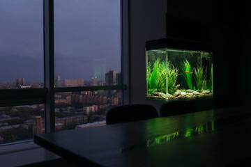 Modern interior with an aquarium. Fotomurales