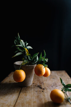 Small potted orange tree with ripe whole fruits on rustic table