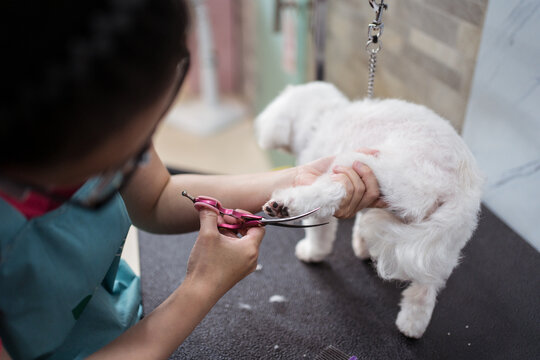 Woman groomer trimming fur of obedient small dog in modern veterinary studio