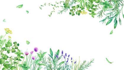 Fototapeta 新緑のハーブガーデンのフレーム装飾。水彩イラスト。