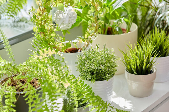 nature, flora and gardening concept - green flowers and houseplants at home
