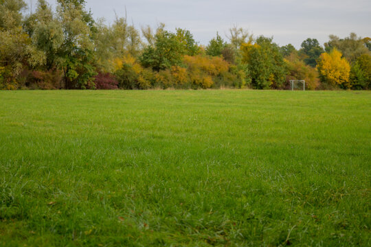 Lush green field with view to autumn woodland