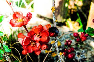 Fototapeta Ogrodowe kwiaty