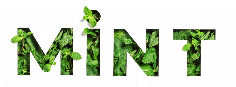 Lettering of English word mint of green natural leaves and cut paper isolated on white. Menthol typeface for decoration