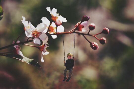 Digital Composite Image Of Boy Swinging On Cherry Blossom