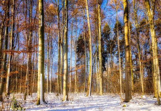 Schneelandschaft Laubbäume im Winter mit Schnee