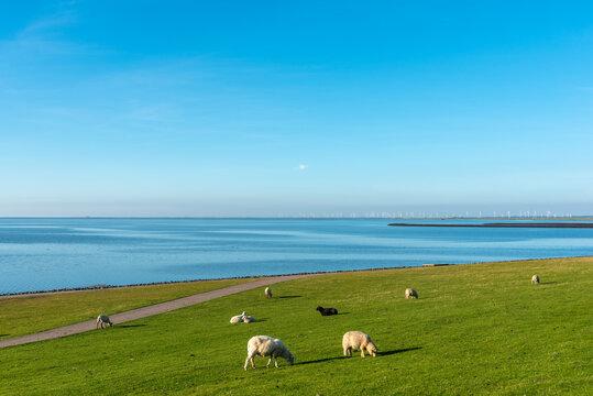 View from Elisabeth-Sophien-Koog over the Wadden Sea National Park
