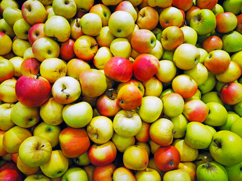 Group of green apples in the supermarket, Background of apples, Fresh apples from the farm garden, many apples in the market square. Healthy food concept.